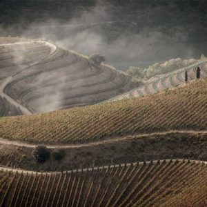 pictury-photo-tours-douro-landscape-portugal