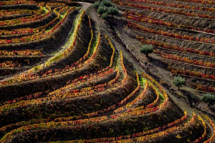Douro-Valley-Vineyards-Portugal
