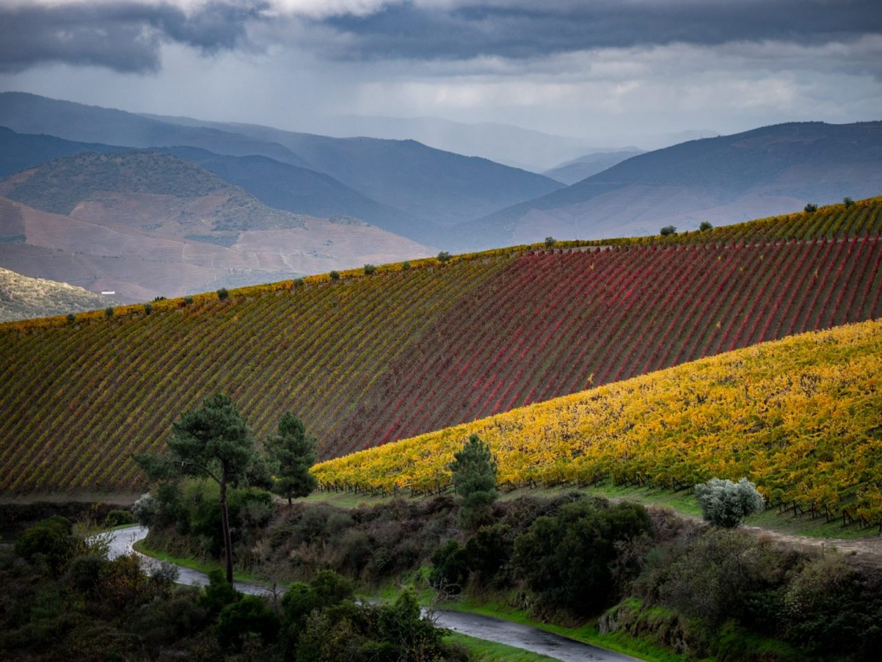 Douro-Valley-Vineyards