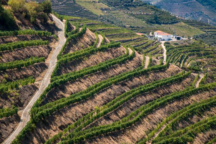 Vineyards Douro Valley Portugal