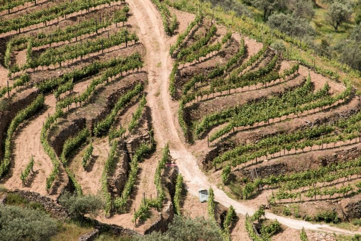 Landscape Douro Valley