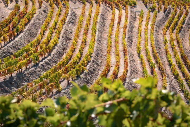 Vineyards Douro Valley
